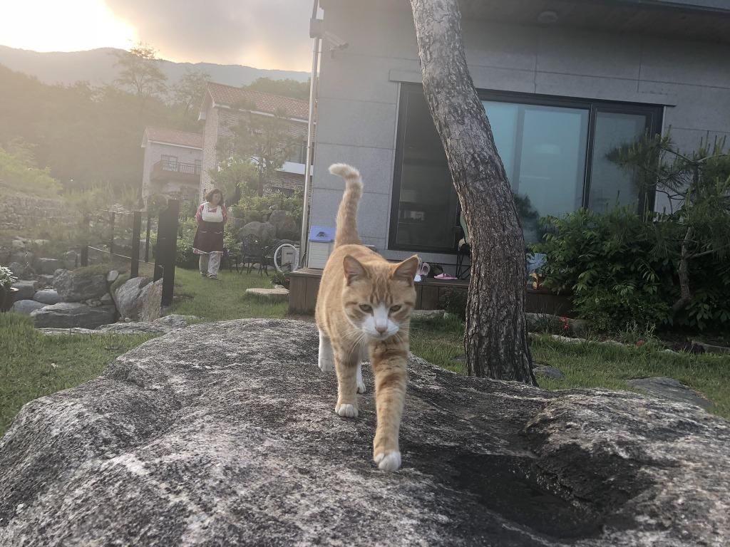 정원과 고양이