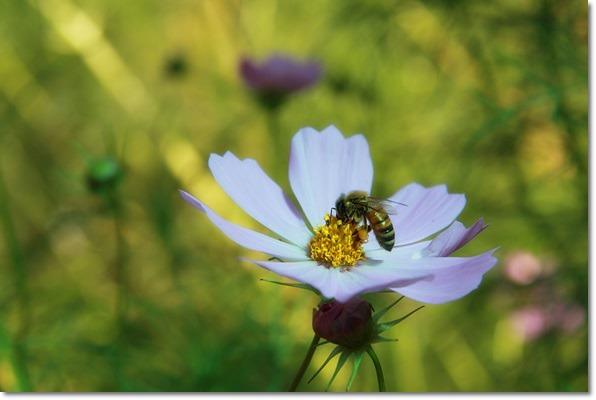 꿀벌처럼 열심히~